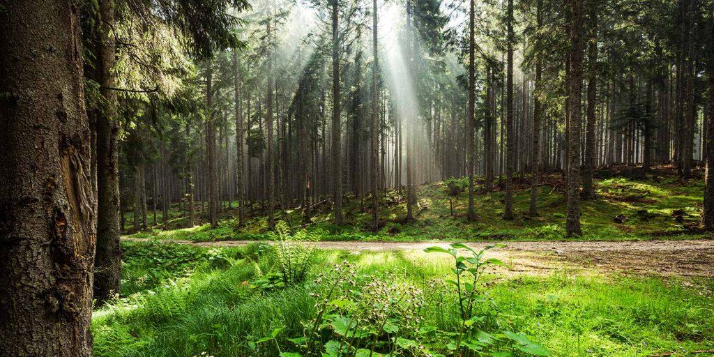 naslovna-gozd